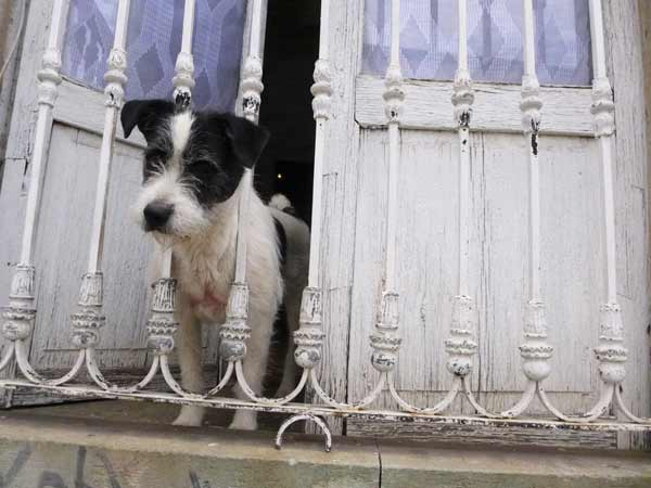 Mexico-dog-window